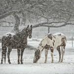 北海道新冠町の競優牧場で競走馬2頭が銃撃された理由は?