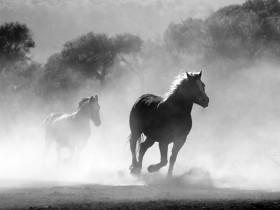 horse-430441_640