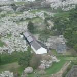 函館五稜郭公園の桜の見頃はいつ?満開時期や連休中の天気をチェック
