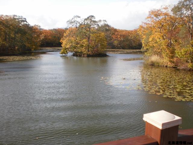大沼湖に点在する島々が眺められる。