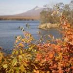 大沼公園の紅葉が見ごろを迎える時期は?おすすめ散策ルートも写真付きで解説