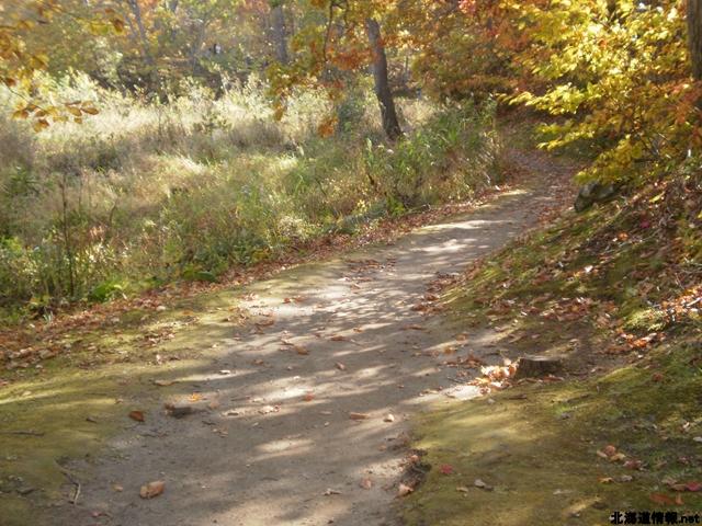 島を渡り終えると森の小路コースにつながる。